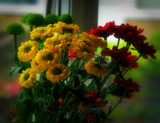 Another Flowers by the window.. by biffobear, photography->flowers gallery