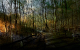 Briarwood by casechaser, photography->manipulation gallery