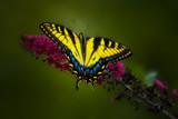 Butterfly Effect II by stylo, photography->butterflies gallery