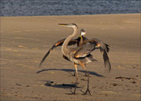 Catch of the Day by allisontaylor, Photography->Birds gallery