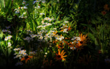 Wildflowers by casechaser, photography->manipulation gallery