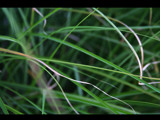 Long Grass by ANGRYkid, Photography->Nature gallery
