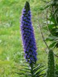 little purple flowers by Cindysweetapple, photography->flowers gallery