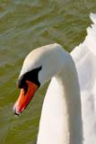 Regal Beauty by braces, Photography->Birds gallery