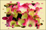 Hydrangea Happiness by LynEve, photography->manipulation gallery