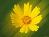 Sunshower by Hottrockin, Photography->Flowers gallery