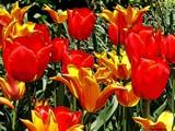 Tulip Highrise by jojomercury, Photography->Manipulation gallery