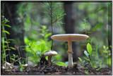 Hidden Treasures by HanneK, Photography->Mushrooms gallery