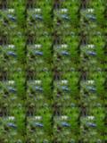 Nigella x 16 by braces, photography->flowers gallery