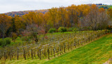 Vineyard at Monticello by luckyshot, photography->landscape gallery