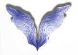 Angel Wings by Lupus_Solus, photography->manipulation gallery