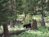 Mama Bear by Zava, photography->animals gallery