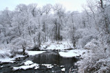 White Woods by Silvanus, photography->landscape gallery