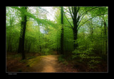 Forest Dreams by kodo34, photography->landscape gallery