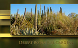 Desert Botanical Gardens III by nmsmith, Photography->Landscape gallery