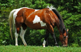 Painted Horse by SatCom, Photography->Animals gallery