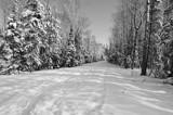 B/W - Winter Wonderland - Beyond the Bridge by icedancer, contests->b/w challenge gallery