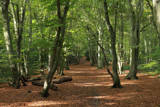 Come along and walk with me by Paul_Gerritsen, Photography->Landscape gallery