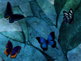 Shades of Blue by Neass, Photography->Butterflies gallery