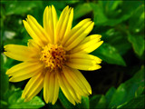 Simply Yellow by clarkephotography, Photography->Macro gallery