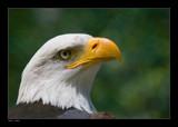 Symbol by kodo34, photography->birds gallery