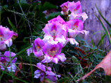 Little Fall Flowers - in the hood by wheedance, Photography->Flowers gallery