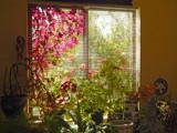 Garden in the Window by trixxie17, photography->gardens gallery