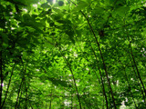 Green Leaves by casechaser, photography->nature gallery