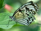 My Flutterby by drgibson, Photography->Butterflies gallery