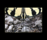 Face To Face by tigger3, Photography->Butterflies gallery