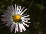 Illumination by ekowalska, Photography->Flowers gallery