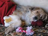 Sleepy Girl by Buck_n_Chloe, photography->pets gallery