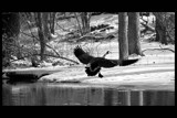 Honk, Honk! by tigger3, photography->birds gallery