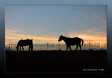 Silhouettes by jeffertheguy, Photography->Animals gallery