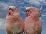 Feels like heaven by Paul_Gerritsen, Photography->Birds gallery