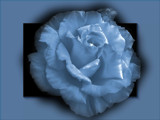 Dream Rose by LynEve, Photography->Manipulation gallery