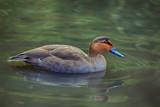 I like by biffobear, photography->birds gallery