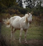 Horse # 2 by picardroe, photography->animals gallery