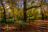 To The Forest Edge 2 by corngrowth, photography->landscape gallery