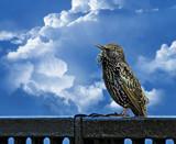 Little Tommy Tucker by biffobear, photography->birds gallery