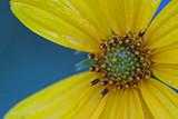 deep dew dew by tee, Photography->Macro gallery