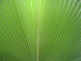 Palm Leaf by eam0, Photography->Textures gallery