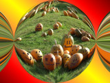 Faces in the Punkin' Patch!! by verenabloo, Photography->Manipulation gallery