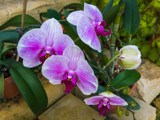More Orchids by Pistos, photography->flowers gallery