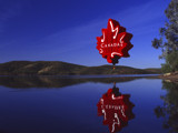 Canada Balloon by Surfcat, Photography->Balloons gallery