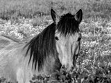 A Horse by Eubeen, contests->b/w challenge gallery