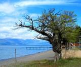 Beach Tree by koca, photography->landscape gallery