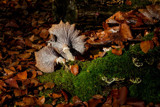Relax by japio, photography->mushrooms gallery