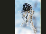 Frosted by wheedance, Photography->Macro gallery