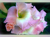Summer Memories by LynEve, Photography->Flowers gallery